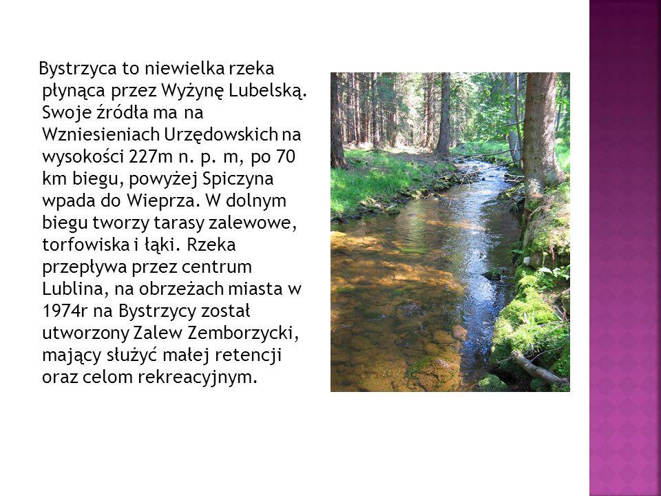Bystrzyca to niewielka rzeka płynąca przez Wyżynę Lubelską