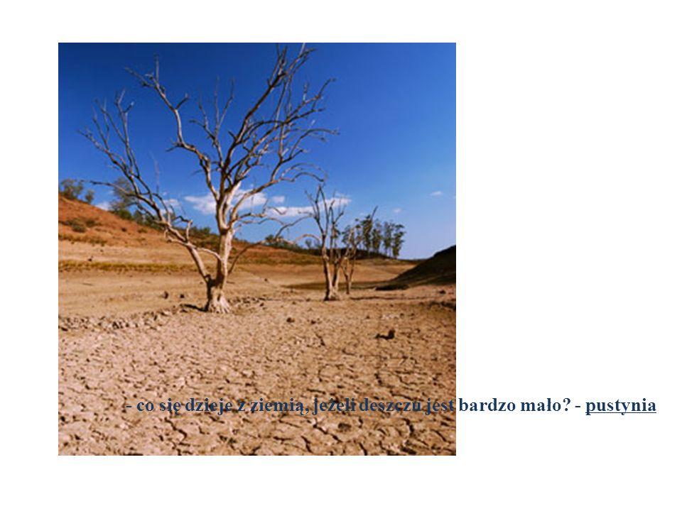 - co się dzieje z ziemią, jeżeli deszczu jest bardzo mało - pustynia