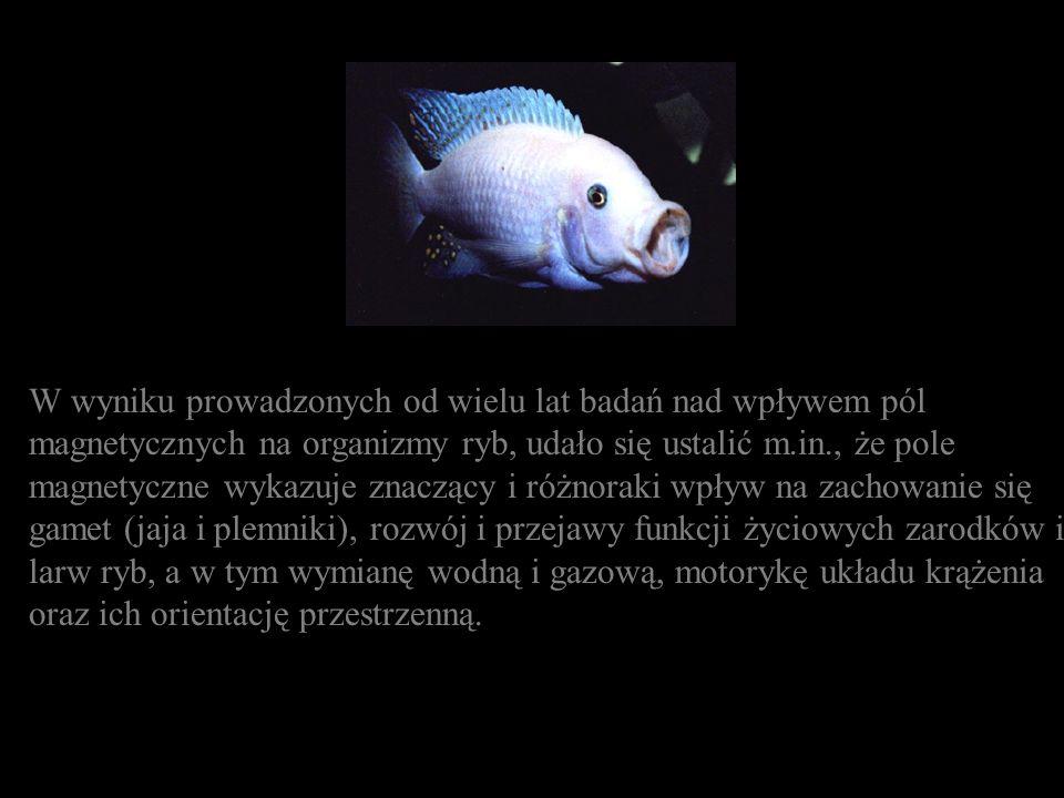 W wyniku prowadzonych od wielu lat badań nad wpływem pól magnetycznych na organizmy ryb, udało się ustalić m.in., że pole magnetyczne wykazuje znaczący i różnoraki wpływ na zachowanie się gamet (jaja i plemniki), rozwój i przejawy funkcji życiowych zarodków i larw ryb, a w tym wymianę wodną i gazową, motorykę układu krążenia oraz ich orientację przestrzenną.