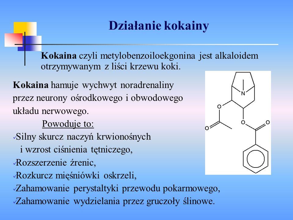 Działanie kokainy Kokaina hamuje wychwyt noradrenaliny