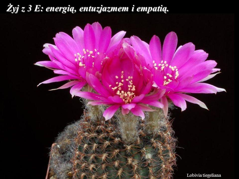 Żyj z 3 E: energią, entuzjazmem i empatią.