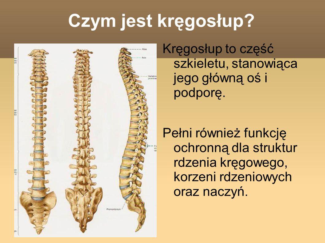 Czym jest kręgosłup Kręgosłup to część szkieletu, stanowiąca jego główną oś i podporę.