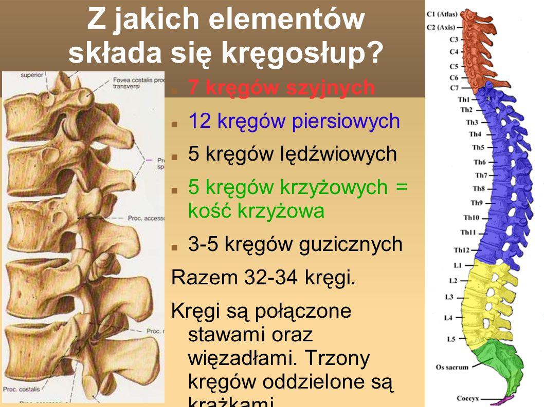 Z jakich elementów składa się kręgosłup
