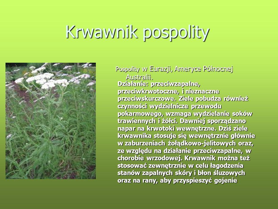 Krwawnik pospolity Pospolity w Eurazji, Ameryce Północnej Australii.