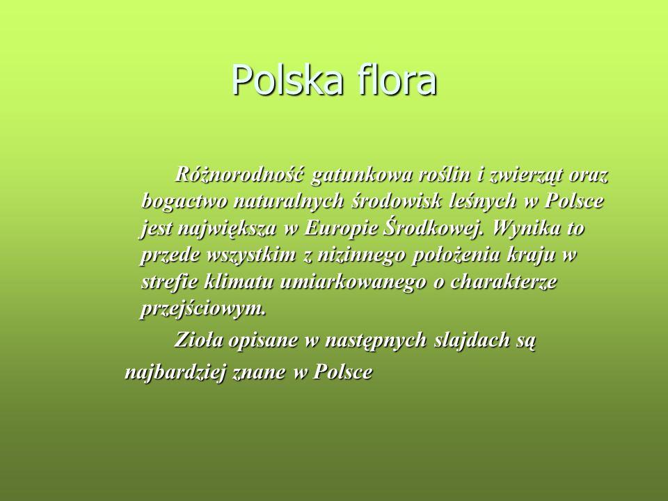 Polska flora Zioła opisane w następnych slajdach są