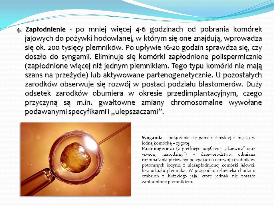 """4. Zapłodnienie - po mniej więcej 4-6 godzinach od pobrania komórek jajowych do pożywki hodowlanej, w którym się one znajdują, wprowadza się ok. 200 tysięcy plemników. Po upływie 16-20 godzin sprawdza się, czy doszło do syngamii. Eliminuje się komórki zapłodnione polispermicznie (zapłodnione więcej niż jednym plemnikiem. Tego typu komórki nie mają szans na przeżycie) lub aktywowane partenogenetycznie. U pozostałych zarodków obserwuje się rozwój w postaci podziału blastomerów. Duży odsetek zarodków obumiera w okresie przedimplantacyjnym, czego przyczyną są m.in. gwałtowne zmiany chromosomalne wywołane podawanymi specyfikami i """"ulepszaczami ."""
