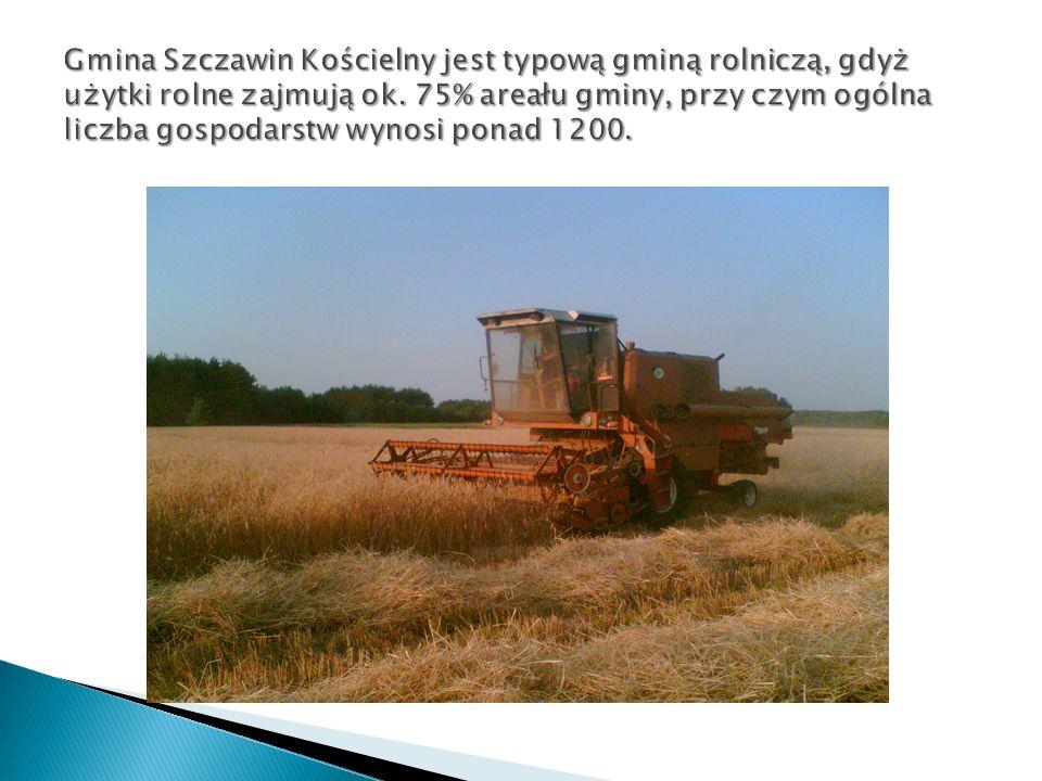 Gmina Szczawin Kościelny jest typową gminą rolniczą, gdyż użytki rolne zajmują ok.