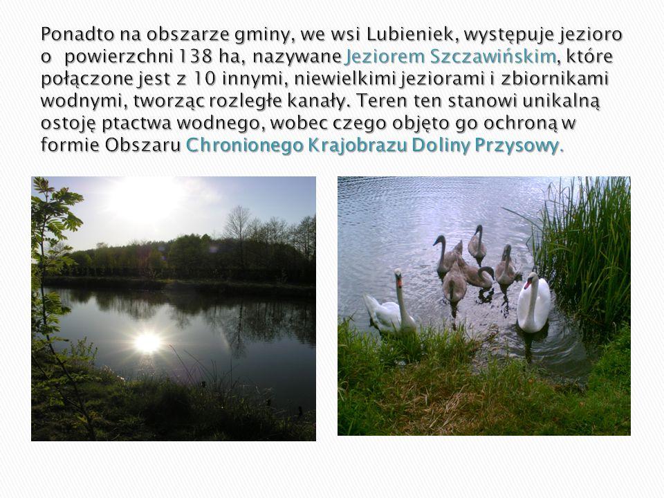 Ponadto na obszarze gminy, we wsi Lubieniek, występuje jezioro o powierzchni 138 ha, nazywane Jeziorem Szczawińskim, które połączone jest z 10 innymi, niewielkimi jeziorami i zbiornikami wodnymi, tworząc rozległe kanały.