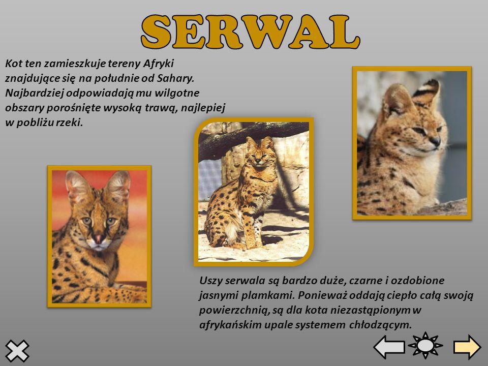SERWAL