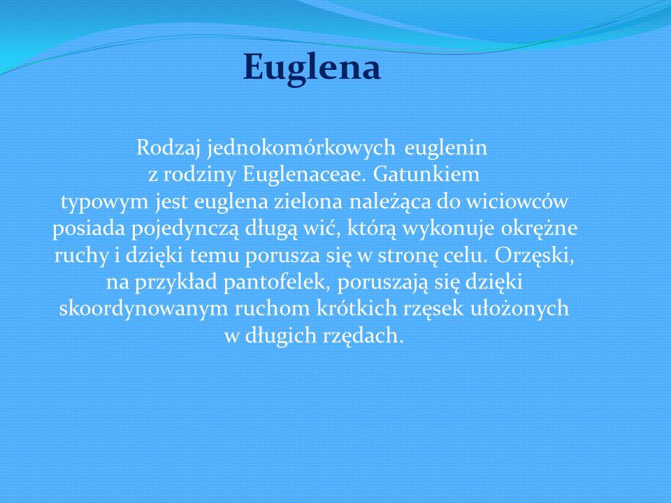 Rodzaj jednokomórkowych euglenin