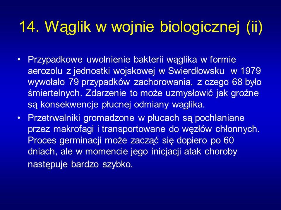 14. Wąglik w wojnie biologicznej (ii)