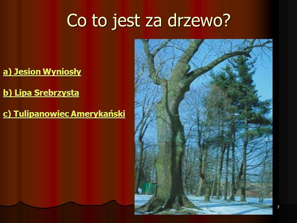 Co to jest za drzewo a) Jesion Wyniosły b) Lipa Srebrzysta