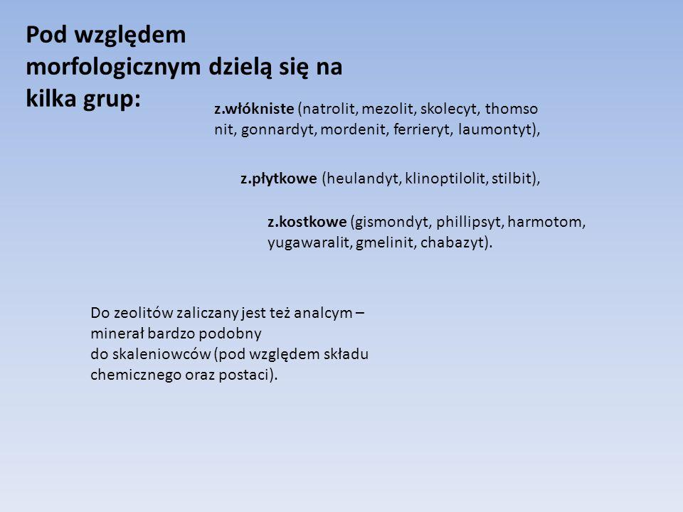 Pod względem morfologicznym dzielą się na kilka grup: