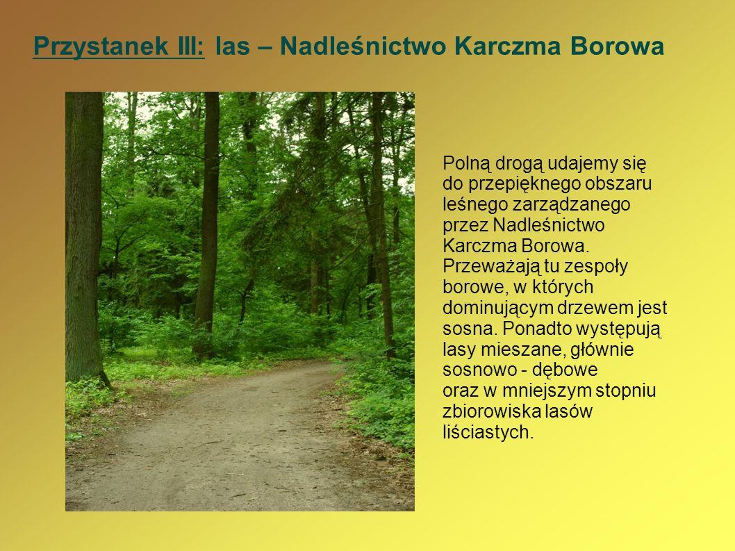 Przystanek III: las – Nadleśnictwo Karczma Borowa