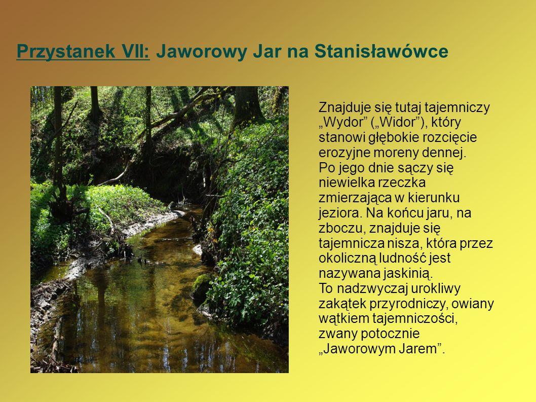 Przystanek VII: Jaworowy Jar na Stanisławówce