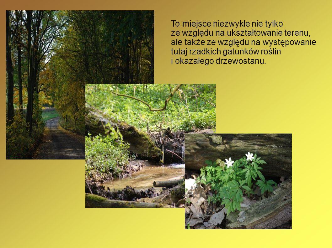 To miejsce niezwykłe nie tylko ze względu na ukształtowanie terenu, ale także ze względu na występowanie tutaj rzadkich gatunków roślin i okazałego drzewostanu.