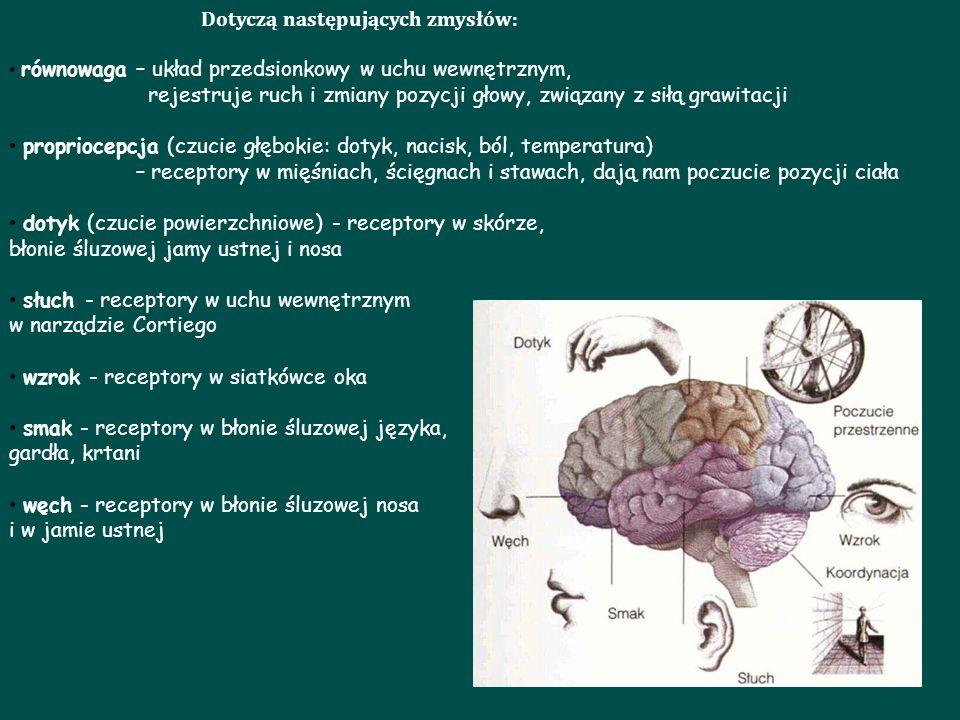 Dotyczą następujących zmysłów: