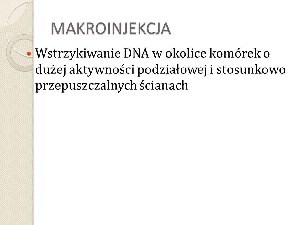 MAKROINJEKCJA Wstrzykiwanie DNA w okolice komórek o dużej aktywności podziałowej i stosunkowo przepuszczalnych ścianach.