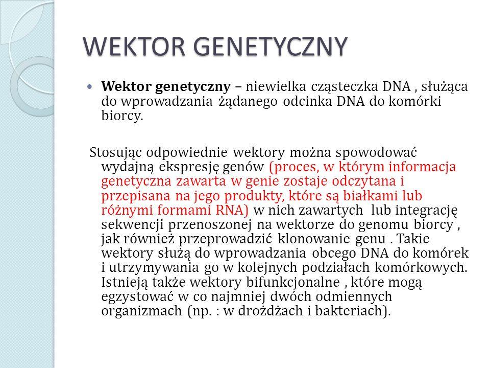 WEKTOR GENETYCZNY Wektor genetyczny – niewielka cząsteczka DNA , służąca do wprowadzania żądanego odcinka DNA do komórki biorcy.