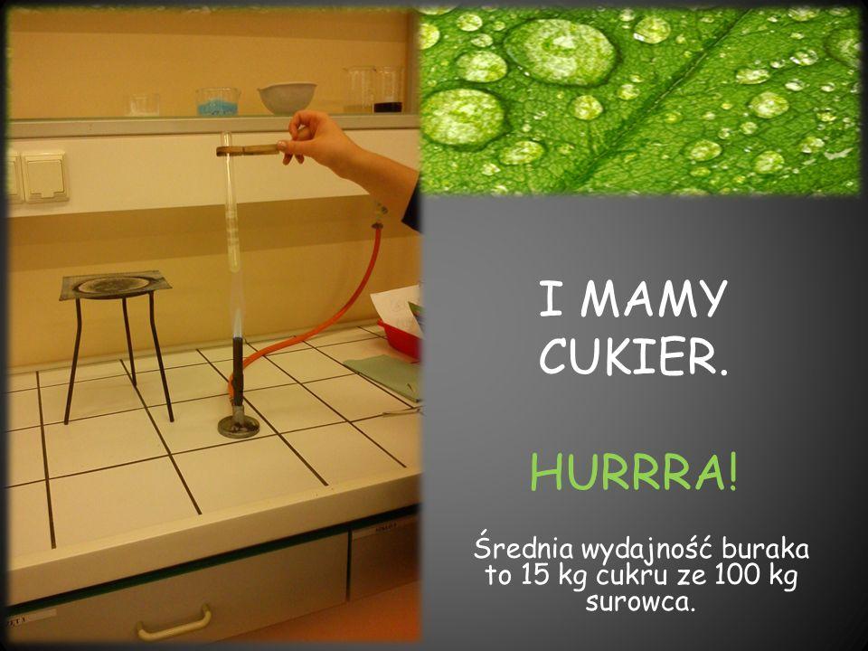 Średnia wydajność buraka to 15 kg cukru ze 100 kg surowca.