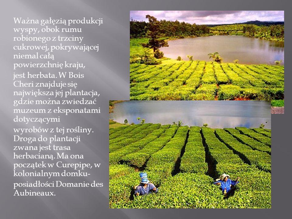 Ważna gałęzią produkcji wyspy, obok rumu robionego z trzciny cukrowej, pokrywającej niemal całą powierzchnię kraju,