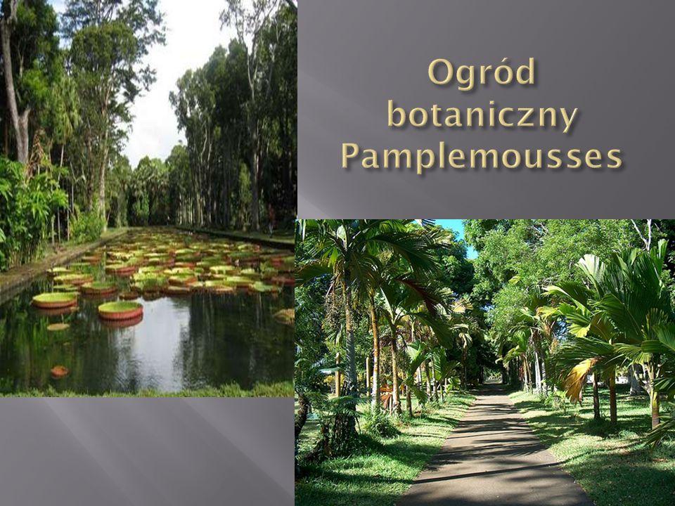 Ogród botaniczny Pamplemousses