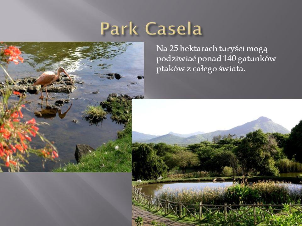 Park Casela Na 25 hektarach turyści mogą podziwiać ponad 140 gatunków ptaków z całego świata.