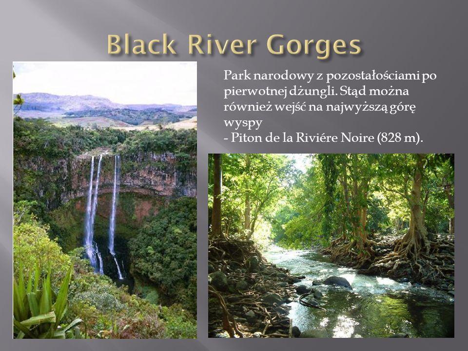 Black River Gorges Park narodowy z pozostałościami po pierwotnej dżungli. Stąd można również wejść na najwyższą górę wyspy.
