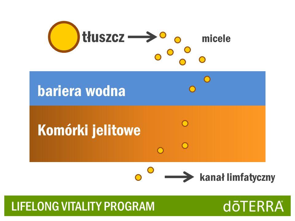 tłuszcz bariera wodna Komórki jelitowe LIFELONG VITALITY PROGRAM
