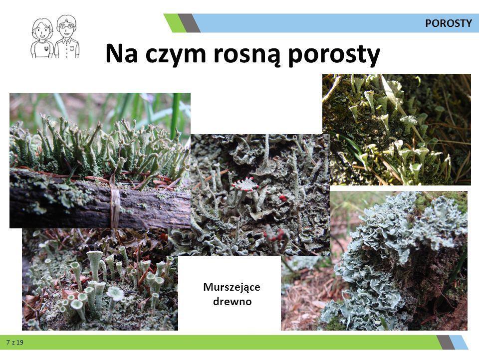 POROSTY Na czym rosną porosty Murszejące drewno 7 z 19