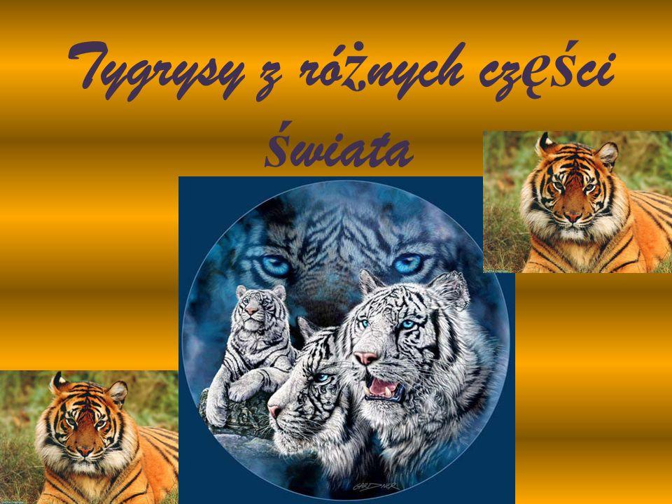 Tygrysy z różnych części świata