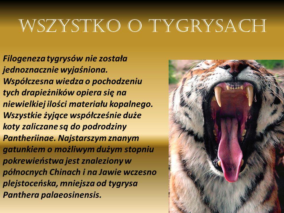 Wszystko o tygrysach