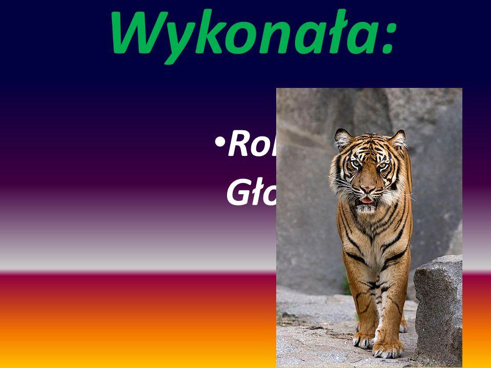 Wykonała: Roksana Głogowska