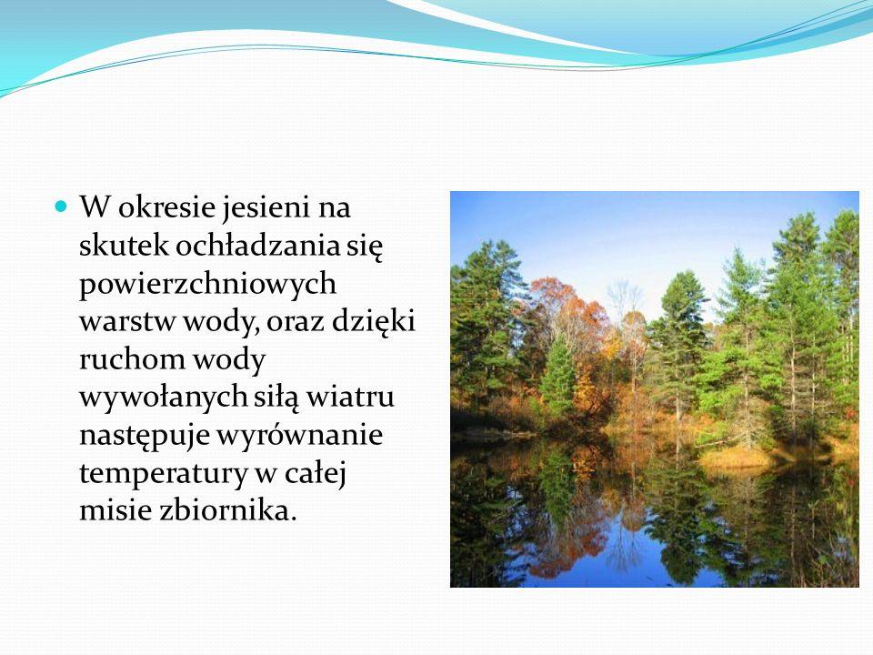 W okresie jesieni na skutek ochładzania się powierzchniowych warstw wody, oraz dzięki ruchom wody wywołanych siłą wiatru następuje wyrównanie temperatury w całej misie zbiornika.