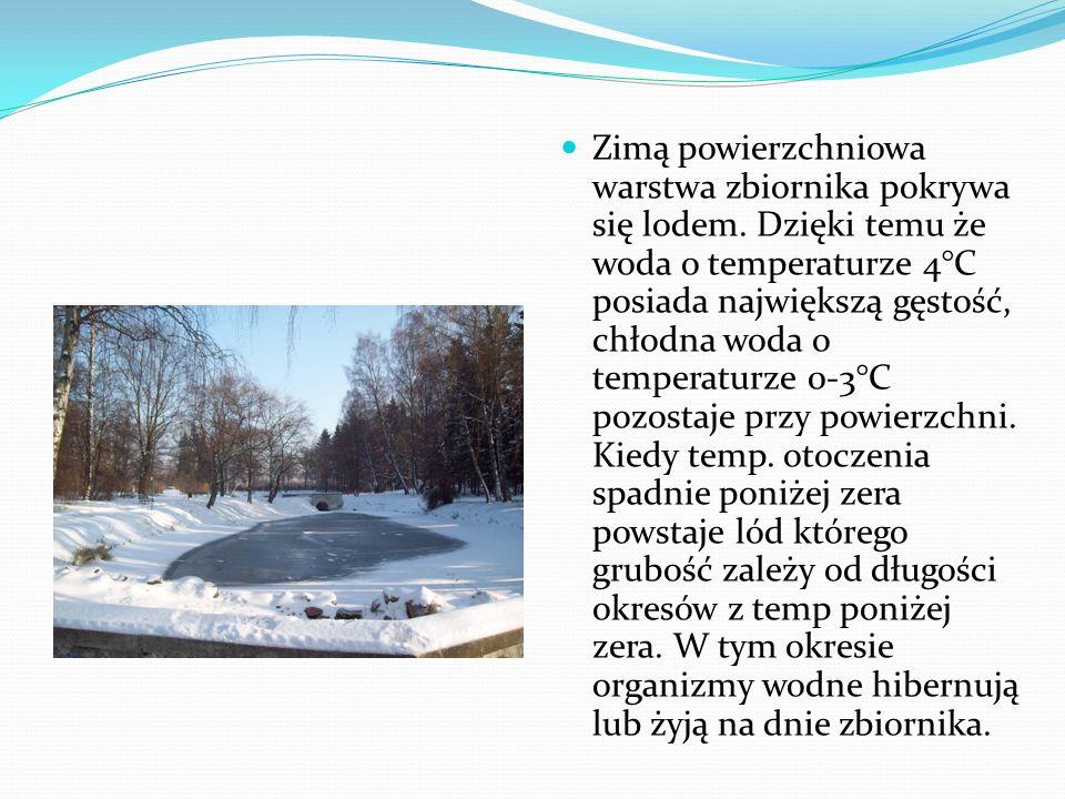 Zimą powierzchniowa warstwa zbiornika pokrywa się lodem