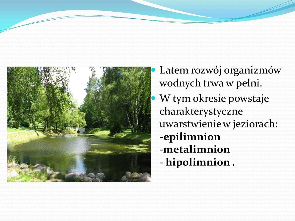 Latem rozwój organizmów wodnych trwa w pełni.