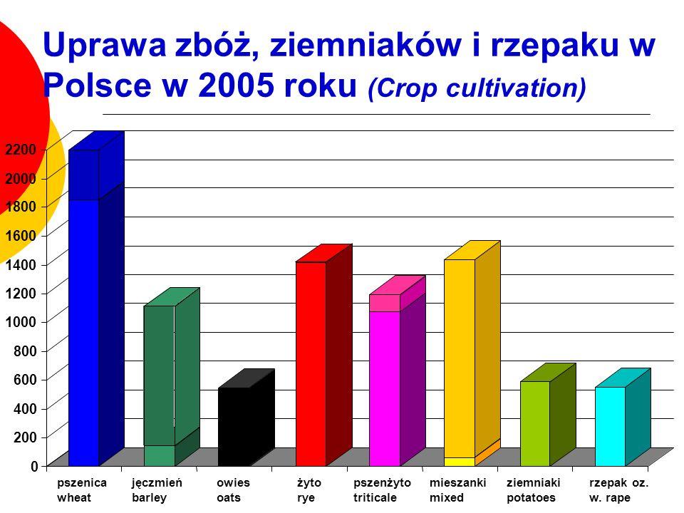 Uprawa zbóż, ziemniaków i rzepaku w Polsce w 2005 roku (Crop cultivation)