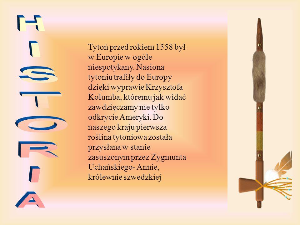 Tytoń przed rokiem 1558 był w Europie w ogóle niespotykany