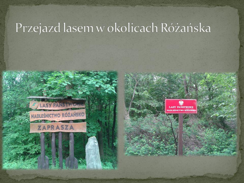Przejazd lasem w okolicach Różańska