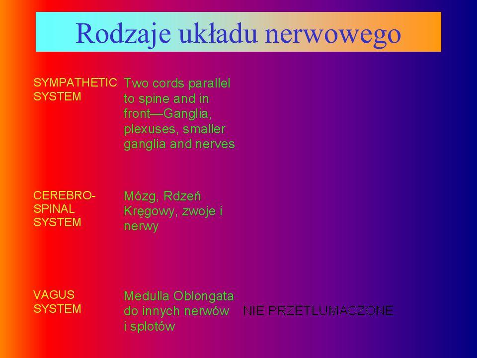 Rodzaje układu nerwowego