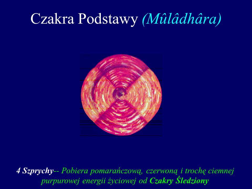 Czakra Podstawy (Mûlâdhâra)