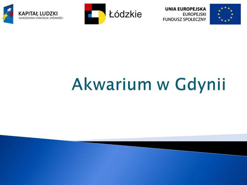 Akwarium w Gdynii
