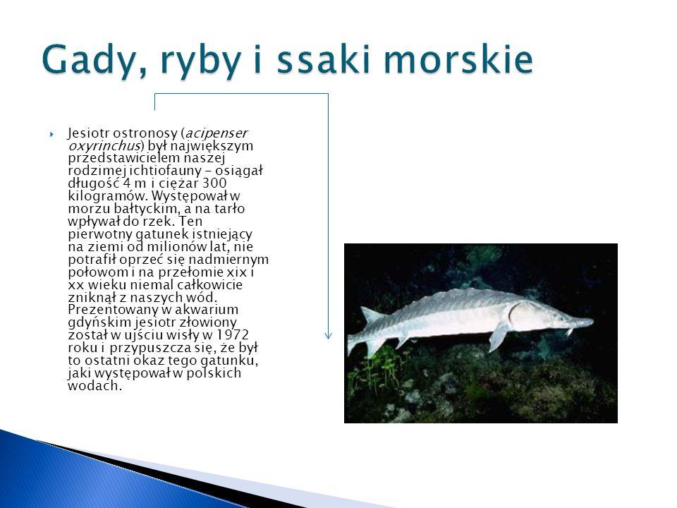 Gady, ryby i ssaki morskie