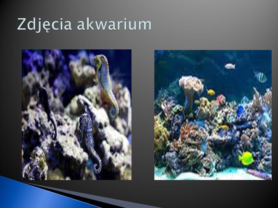 Zdjęcia akwarium