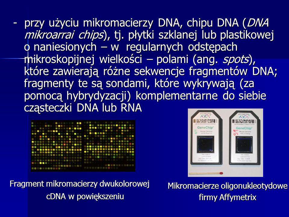 - przy użyciu mikromacierzy DNA, chipu DNA (DNA mikroarrai chips), tj