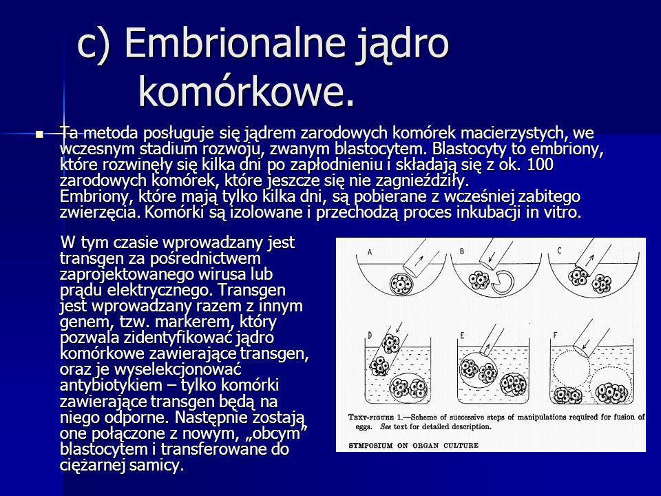 c) Embrionalne jądro komórkowe.