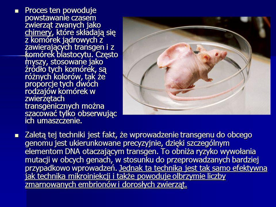 Proces ten powoduje powstawanie czasem zwierząt zwanych jako chimery, które składają się z komórek jądrowych z zawierających transgen i z komórek blastocytu. Często myszy, stosowane jako źródło tych komórek, są różnych kolorów, tak że proporcje tych dwóch rodzajów komórek w zwierzętach transgenicznych można szacować tylko obserwując ich umaszczenie.