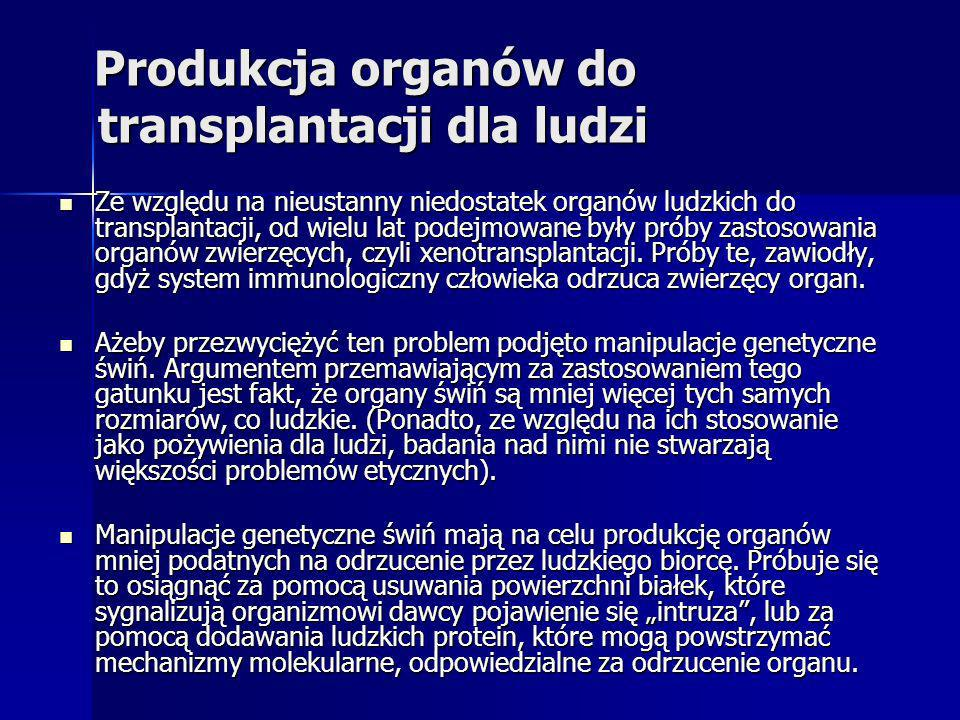 Produkcja organów do transplantacji dla ludzi