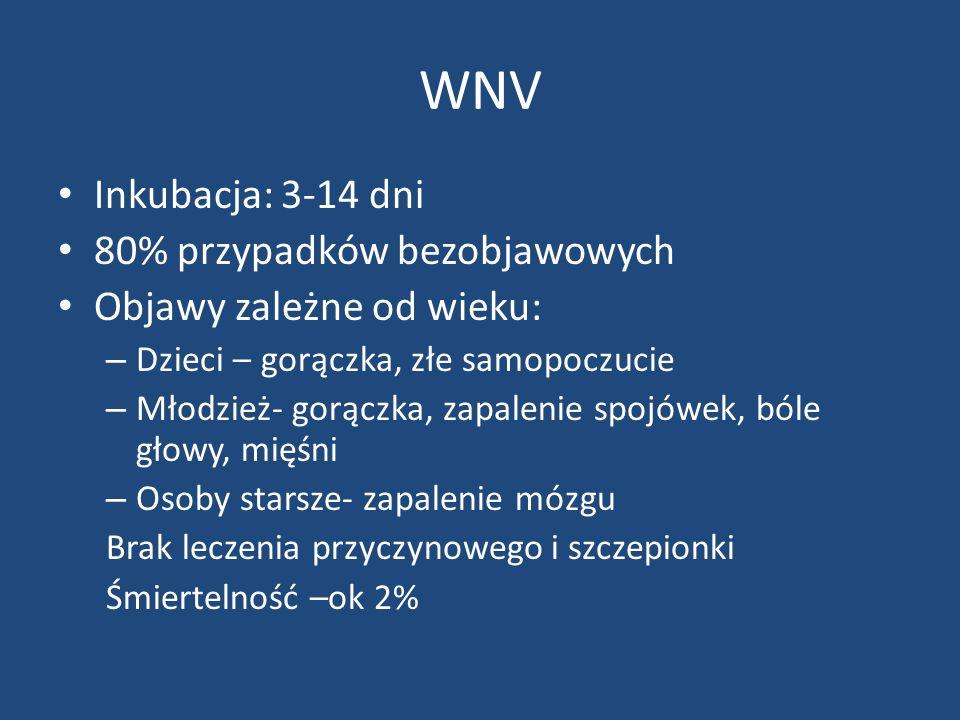 WNV Inkubacja: 3-14 dni 80% przypadków bezobjawowych