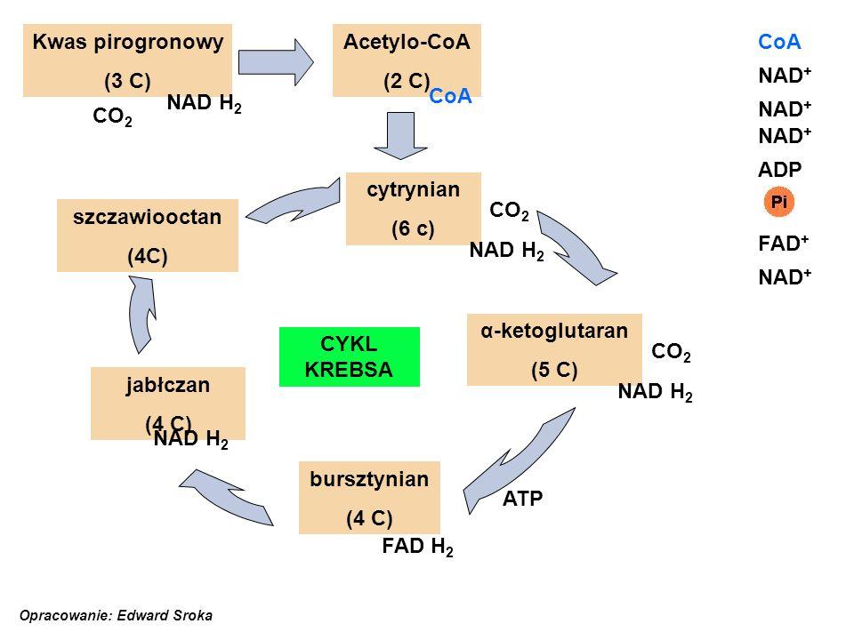Kwas pirogronowy (3 C) Acetylo-CoA (2 C) CoA NAD+ CoA NAD H2 NAD+ CO2
